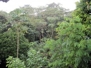vegetation carbet _1