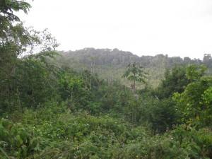 vegetation carbet _3